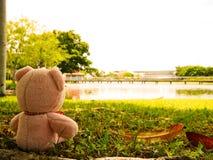 桃红色熊玩偶放松 免版税库存照片