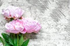 桃红色牡丹开花在白色木背景的花束 平的位置 与拷贝空间的顶视图 免版税图库摄影