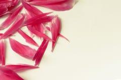 桃红色牡丹瓣的角落 免版税库存图片