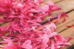桃红色牡丹瓣 库存图片