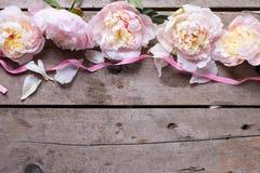 从桃红色牡丹的边界在年迈的木背景开花 免版税库存照片