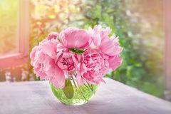 桃红色牡丹美丽的嫩花束在窗口在夏天晴天 免版税库存照片
