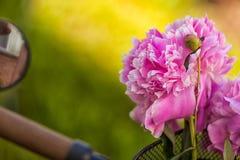 桃红色牡丹美丽的新鲜的花束的特写镜头  免版税图库摄影