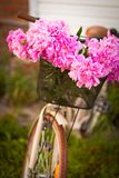 桃红色牡丹美丽的新鲜的花束的特写镜头  免版税库存图片