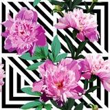 桃红色牡丹花卉样式,几何黑白背景 免版税图库摄影