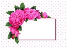桃红色牡丹花和卡片 免版税库存图片
