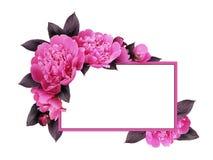 桃红色牡丹花和卡片 图库摄影