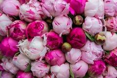 桃红色牡丹花束 蝴蝶下落花卉花重点模式黄色 免版税图库摄影