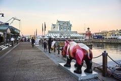 桃红色犀牛维多利亚和阿尔伯特江边 库存图片