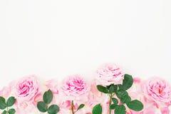 桃红色玫瑰、叶子和瓣的花卉样式在白色背景 平的位置,顶视图 库存照片