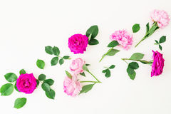 桃红色玫瑰、牡丹和叶子在白色背景 所有所有构成要素花卉例证各自的对象称范围纹理导航 平的位置,顶视图 免版税库存图片