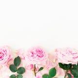 桃红色玫瑰、瓣和叶子花卉框架在白色背景 平的位置,顶视图 免版税图库摄影