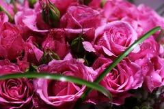桃红色玫瑰典雅的花束特写镜头在绽放的 免版税库存照片