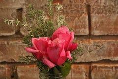 桃红色玫瑰和叶子在瓶子 库存图片