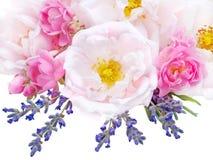 桃红色玫瑰和在白色隔绝的淡紫色花束 库存照片
