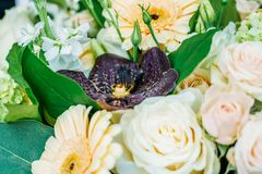 桃红色玫瑰和大丁草婚姻花束的雏菊花 图库摄影