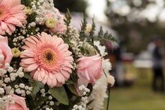 桃红色玫瑰和桃红色大丁草 免版税图库摄影