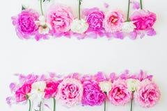桃红色玫瑰和白色毛茛属花卉框架在白色背景 所有所有构成要素花卉例证各自的对象称范围纹理导航 平的位置,顶视图 免版税库存照片