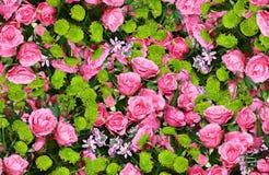 桃红色玫瑰和翠菊花 库存照片