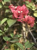 桃红色玫瑰和花 免版税库存图片