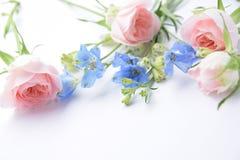 桃红色玫瑰和蓝色花 免版税图库摄影