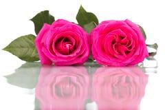 桃红色玫瑰在白色背景隔绝的花花束 库存图片