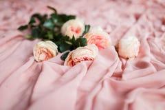 桃红色玫瑰在精美桃红色丝织物说谎 库存照片