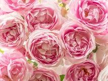 桃红色玫瑰床  免版税库存照片