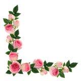 桃红色玫瑰开花并且发芽壁角安排 免版税库存照片