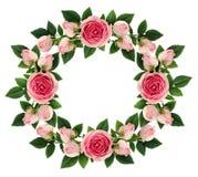桃红色玫瑰开花并且发芽围绕框架 免版税图库摄影