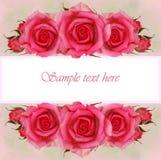 桃红色玫瑰开花贺卡的构成 库存照片