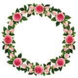 桃红色玫瑰开花围绕框架 免版税库存照片