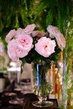 桃红色玫瑰是大美好的情况 图库摄影