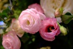 桃红色玫瑰是大美好的情况 库存图片