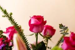 桃红色玫瑰特写镜头在玫瑰花束的  免版税库存照片