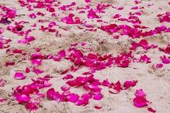 桃红色玫瑰的瓣在沙子的靠岸 免版税图库摄影