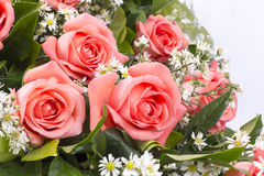 桃红色玫瑰的背景图象 免版税库存照片