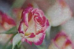 桃红色玫瑰精美葡萄酒花束特写镜头  难看的东西背景所有场合,特别欢乐,选择聚焦 库存图片