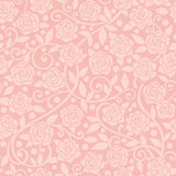 桃红色玫瑰背景 免版税库存图片