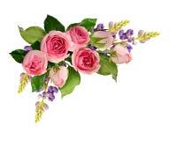 桃红色玫瑰花和紫色羽扇豆垄断构成 免版税库存照片