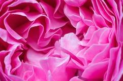 桃红色玫瑰花瓣宏指令背景 库存照片