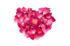桃红色玫瑰花瓣心脏形状形成 库存照片