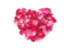 桃红色玫瑰花瓣心脏形状形成 免版税库存图片