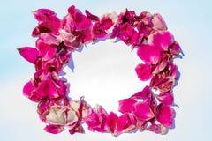 桃红色玫瑰花瓣方形的框架  r 图库摄影