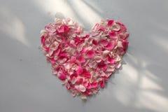 桃红色玫瑰花瓣的心脏 免版税库存照片