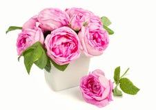 桃红色玫瑰花瓶 免版税图库摄影