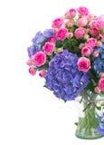 桃红色玫瑰诗句和蓝色霍滕西亚花关闭  免版税库存图片