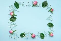 桃红色玫瑰顶视图和绿色叶子在蓝色背景的正方形缠绕安排 提取花卉背景 免版税库存照片