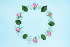 桃红色玫瑰顶视图和绿色叶子缠绕在蓝色背景 提取花卉背景 库存图片