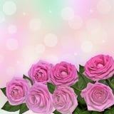桃红色玫瑰贺卡 免版税库存照片